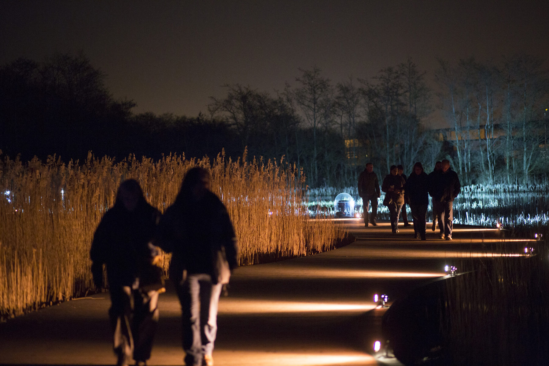 Visitors, John Muir Festival 2014, light show | by McAteer Photograph