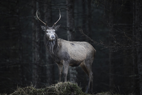 Stag pixel example | By McAteer Photo