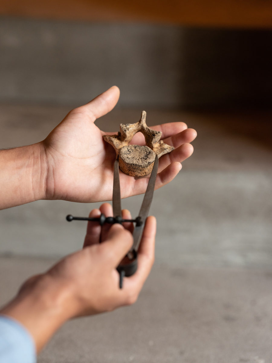 Hands of an young man measuring a vertebra | By McAteer Photo